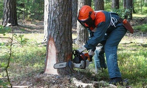 Процесс распила дерева